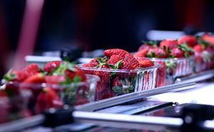 Obst- und Gemüseverarbeitung