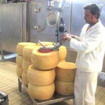 Pneumatischer Manipulator / mit Greifsystem / für Käse / zur Positionierung