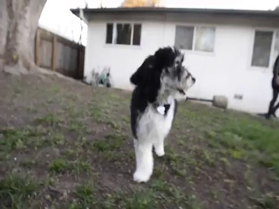 Hobbes der three-legged Hund, zum von 3D zu erhalten druckte prothetisches Bein von den Kalifornien-Kursteilnehmern