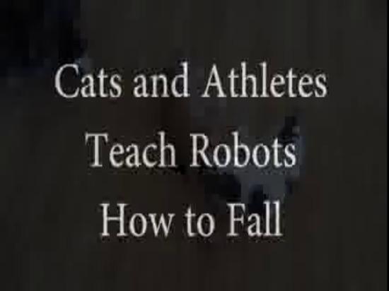 Katzen und Athleten unterrichten Roboter, um zu fallen
