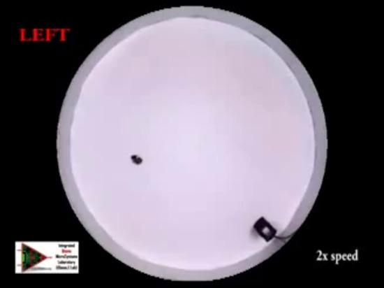 Akustische Steuerung der Hinterwelle Biobots